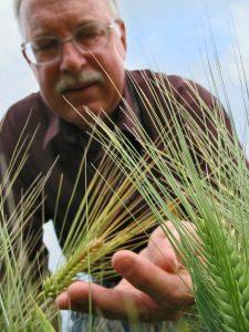 baenziger-wheat